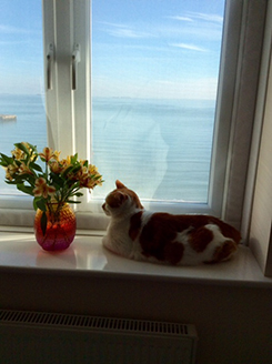 Flat Cats Window screens doing a great job in Isle of Wight