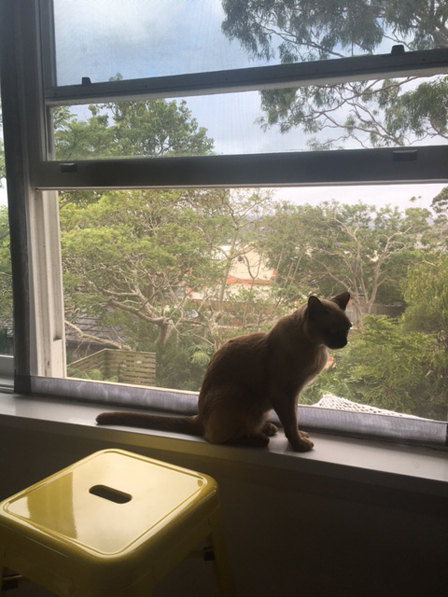 Cat window screens in Balgowlah New South Wales Australia