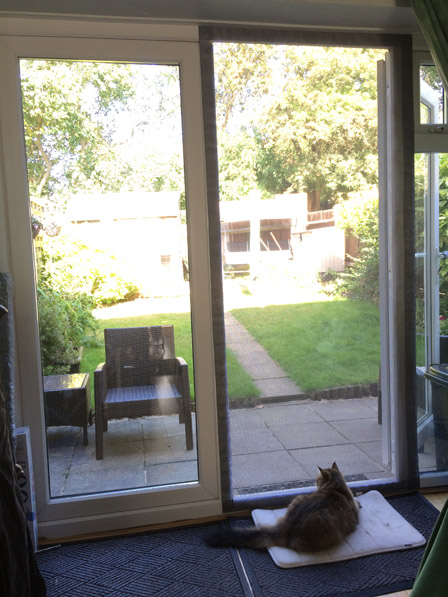 Flat Cats protecting windows in Hertfordshire