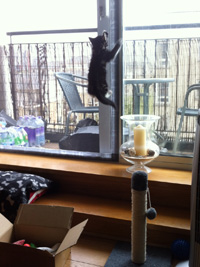 Flat Cats in Poplar London