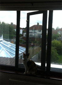 Flat Cats in Taverham, Norwich