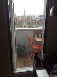 Flat Cats in Hackney, London