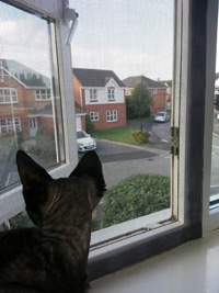 Flat Cats window protection working in Coventry
