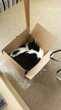 Flat Cats Boxes come in useful too