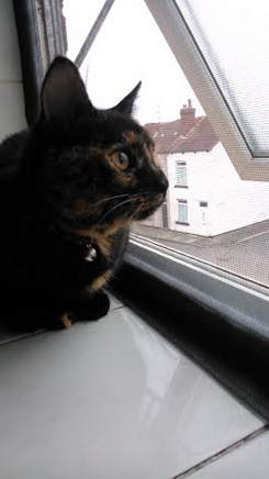 Millie finds that Flat Cats window screens keep her safe in Leeds