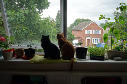 Flat Cats Window Screens in Reigate Surrey
